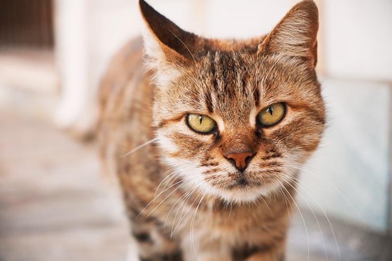 katten uit je tuin verjagen tips