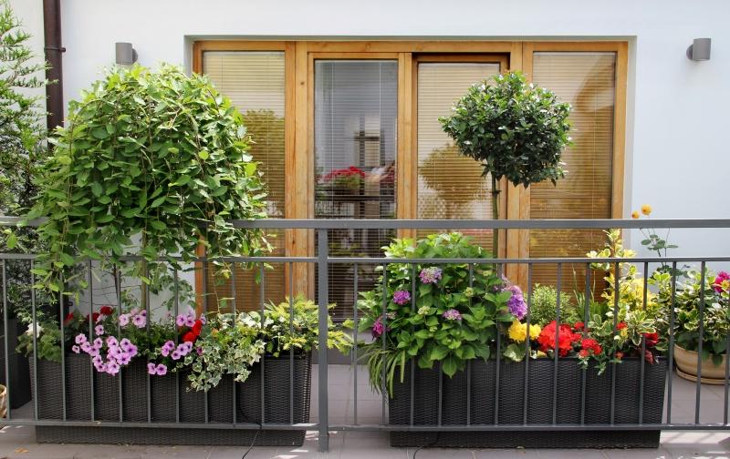 Planten Voor Balkon.Balkon Welke Planten Zijn Geschikt Infobron Nl