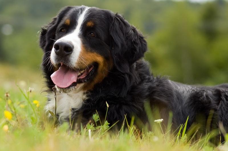 Welke rashonden zijn er for Welke woonstijlen zijn er
