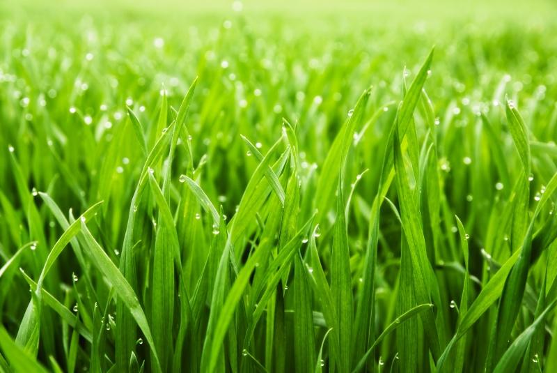 Gras soorten welke zijn er for Welke woonstijlen zijn er