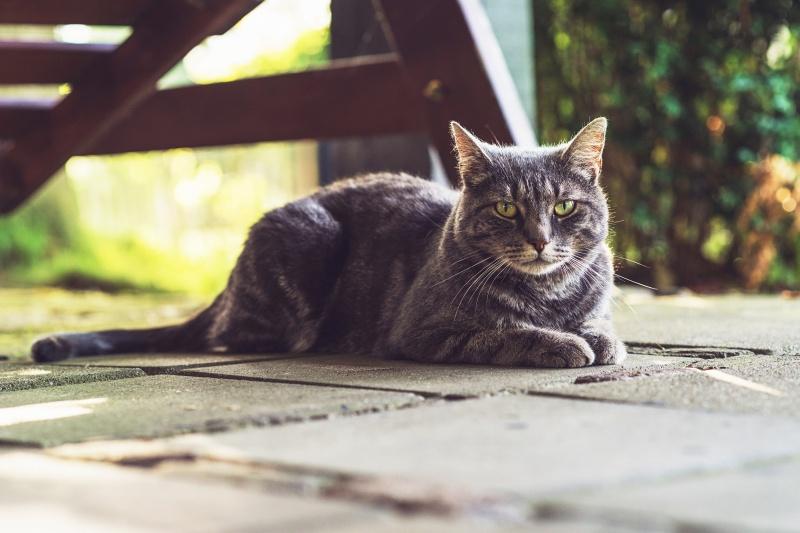 Katten Afschrikken Tuin : Ik wil geen katten in mijn tuin infobron
