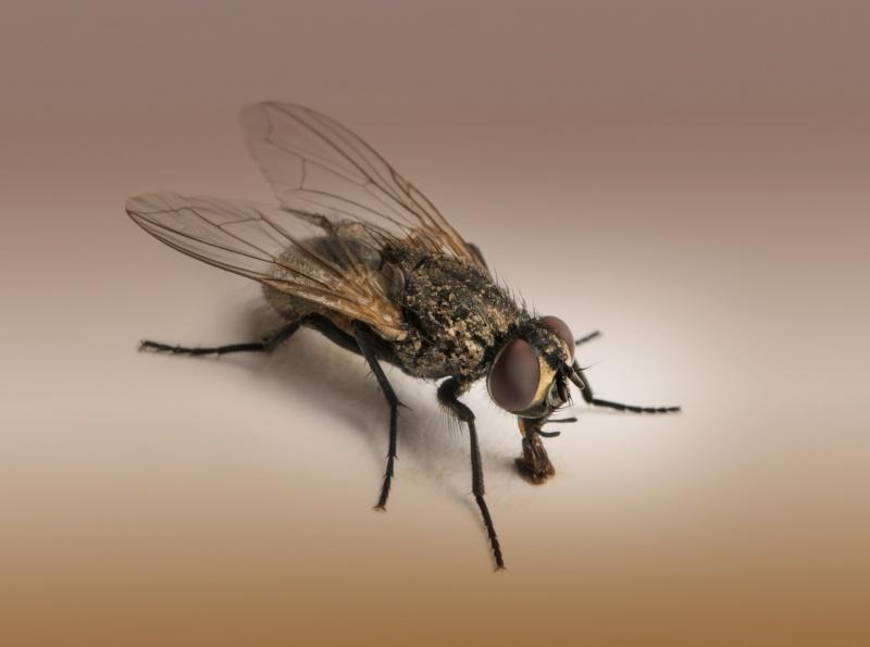 vliegen bestrijden in huis