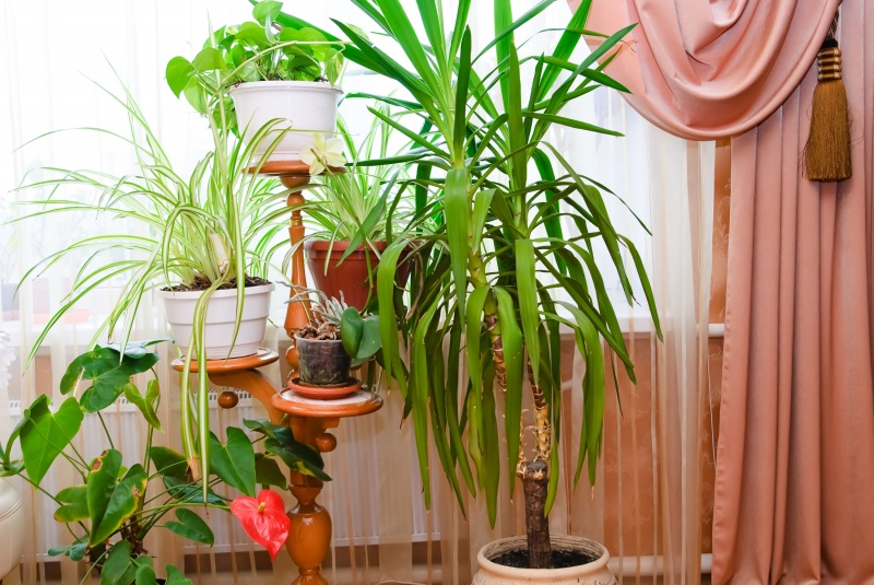 Grote kamerplanten for Grote kamerplanten