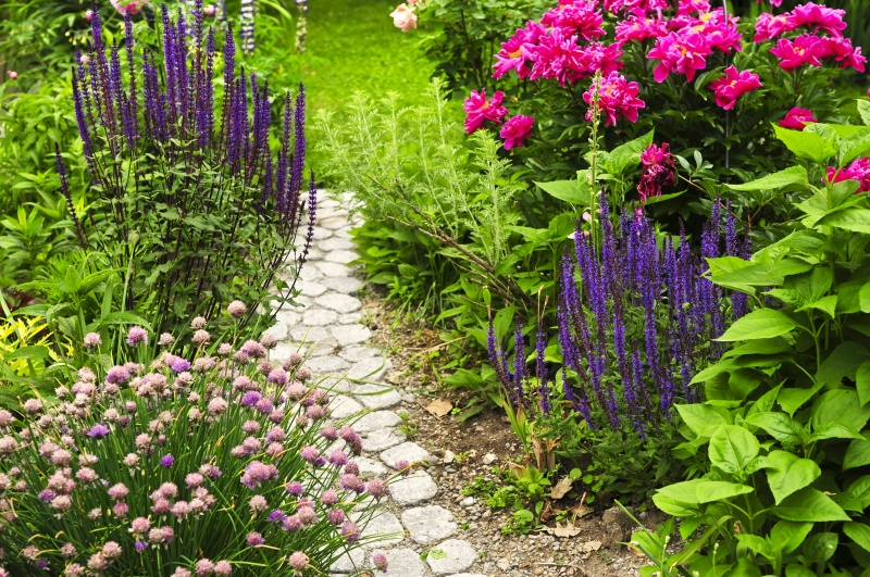 Vaste planten welke zijn er for Welke woonstijlen zijn er