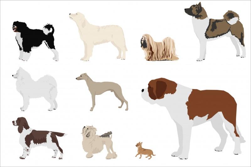 welke hond past bij mij infobron nl