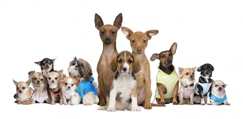 Welke kleine honden zijn er for Welke woonstijlen zijn er
