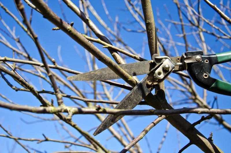 Hoe moet je een appelboom snoeien - Hoe een boom te verlichten ...