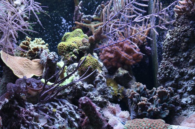 Zeeaquarium beginnen  van de opstart tot het onderhoud   infobron nl