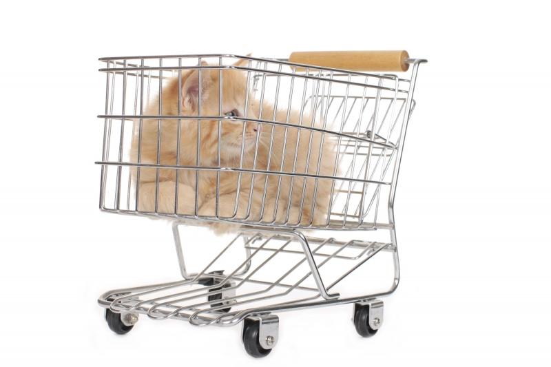Kat kopen, aandachtspunten | infobron.nl | 800 x 533 jpeg 96kB
